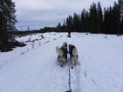 Neige haute pour les chiens