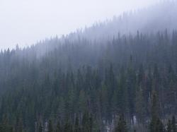 Nuages filant sur la forêt
